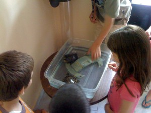 Children at  smart generation language school geting to know some turtles