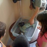 Children at smart generation geting to know some turtles